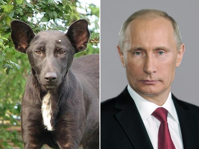 animais que se parecem com celebridades