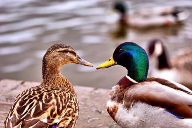 curiosidades sobre a sexualidade dos animais