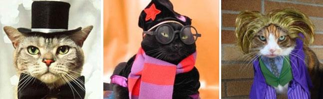 13 gatos que odeiam o Halloween