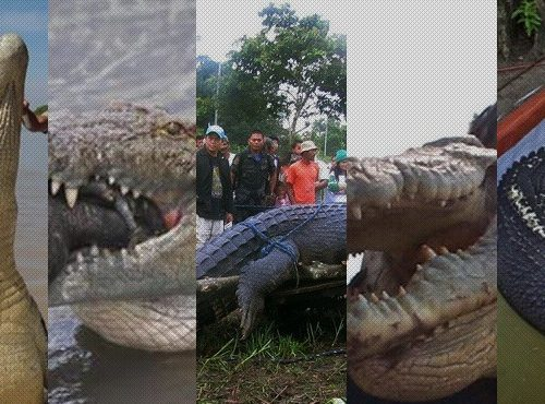 crocodilos