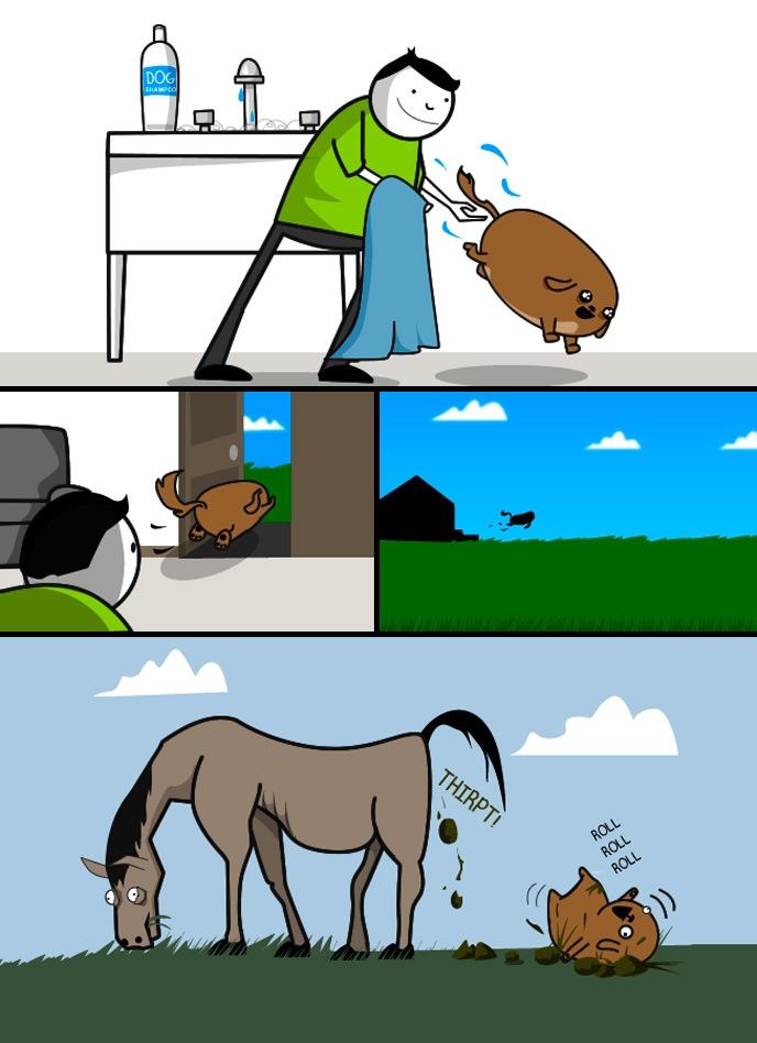 O que o seu cãozinho faz após o banho?