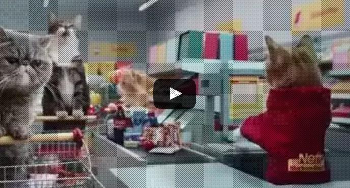 gatos fazendo compras seu jeca