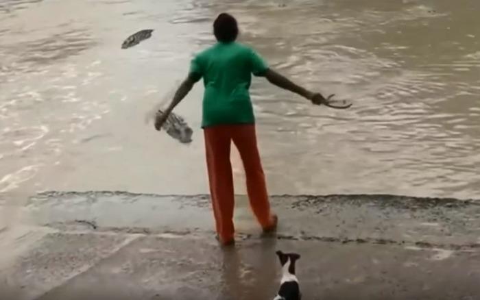mulher espanta crocodilo com apenas um chinelo