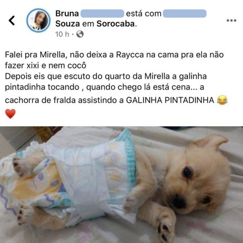 Uma cachorra de frauda assistindo Galinha Pintadinha