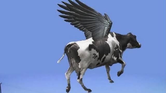 Carro é atingido por vaca 'voadora' na Inglaterra