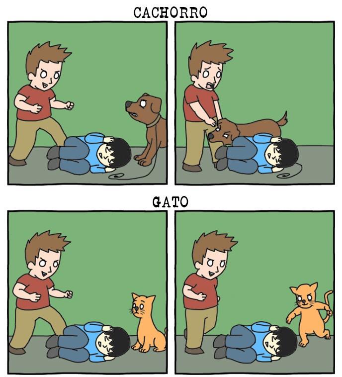 cachorro vs Gato
