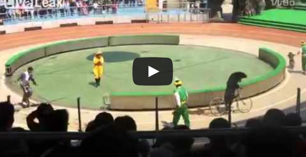 Urso vs. Macaco