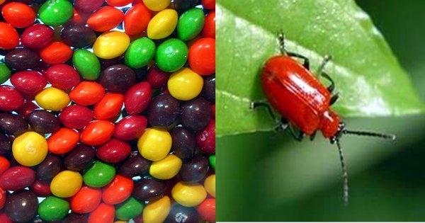Ingredientes bizarros usados em alimentos