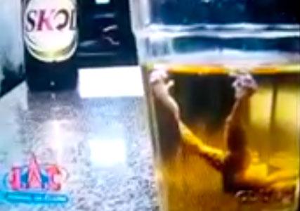 Homem encontra perereca dentro da garrafa de cerveja