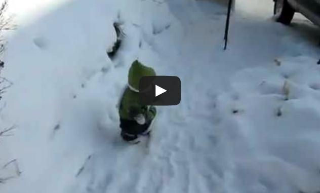 Macaco pulando na neve