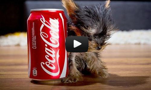 O menor cão do mundo