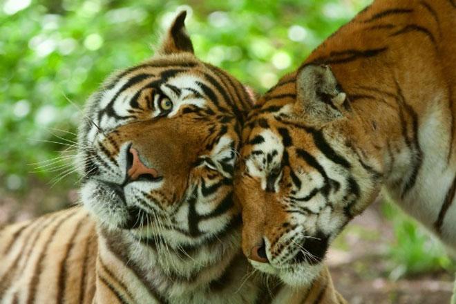 animais apaixonados