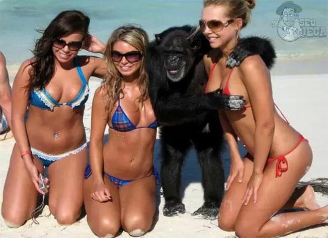 Queria estar no lugar deste macaco agora